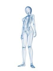 weibliches skelett