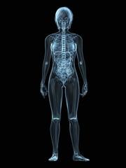 transparenter weiblicher körper mit skelett