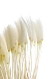 soft dandelion seeds - 13939043