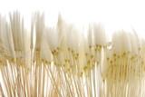 soft dandelion seeds - 13939051