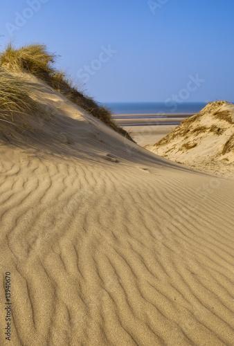 Fototapeten,strand,blau,britisch british kurzhaar,küste