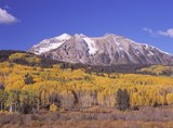 Autumn aspen grove in the Rocky Mountains, Gunnison National Forest poster