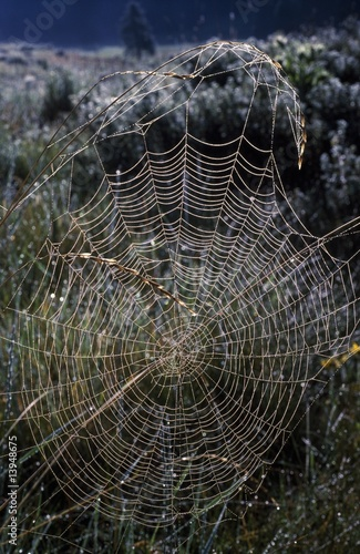 Dew-covered orb web