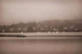 Sailboats in Victoria, British Columbia poster