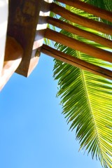 Low angle view of a palm leaf
