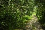 Pathway through brush poster