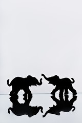 Elephant pair reflection
