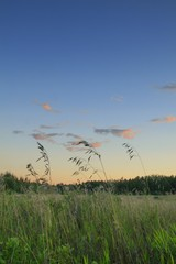 Grasses against evening sky..