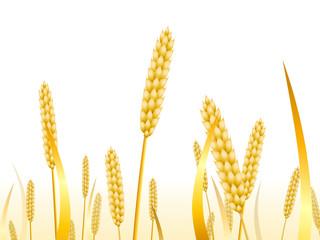 Ballade dans un champ de blé