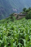 Field and village of Walnut Grove in Tiger Leaping Gorge, China poster