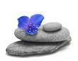 pierres et fleur sur fond blanc - galets de décoration