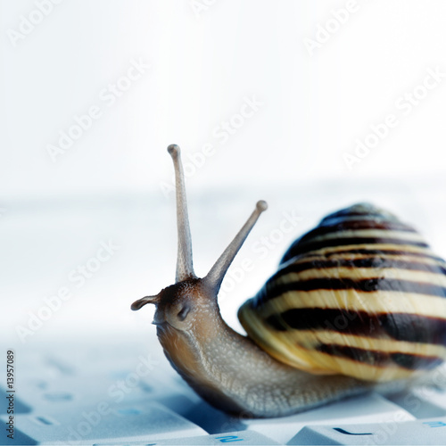 snail on a laptop