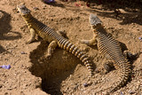 Spiked Reptiles poster