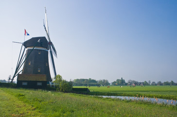 Dutch watermill in polder in spring