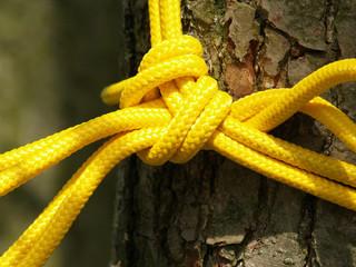 Baumrinde mit gelben Seil verknotet