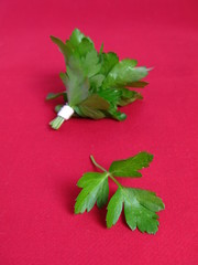Bouquet of parsley tied with a white rope in red background
