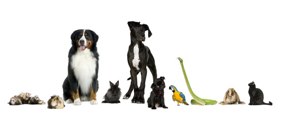 Group of pets - Dog, cat, bird, reptile, rabbit, ferret- in fron