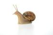 escargot - 14002492