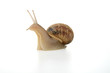 Leinwandbild Motiv escargot