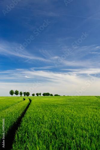 Fototapeten,landschaft,feld,cereal,frühling