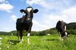 Viehwirtschaft2