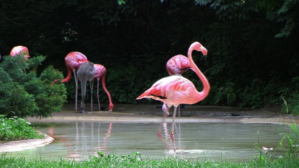 Flamingo Spinning Backwards