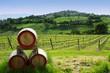 vigne e botti di vino