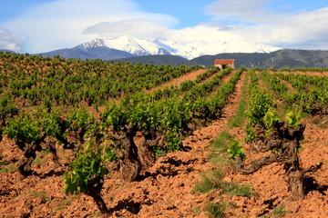 Languedoc Roussillon, Weinstöcke, Pyrenäen, Frankreich