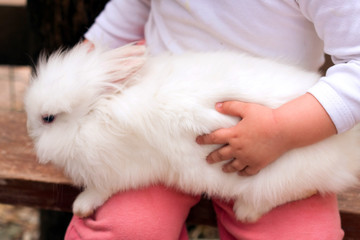 chaild hands hold little rabbit