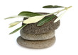 feuilles d'olivier sur galets
