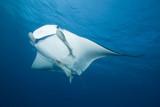 Fototapeta ryba - podwodne - Ryba