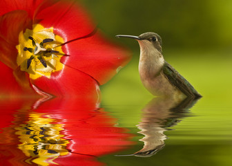 Reflecting Hummingbird