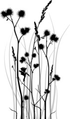 Vector silhouette of grass blades with bur