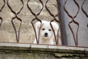 white young dog look to you