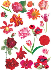 red flowers collection