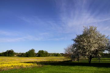 Scenic Spring Time Landscape