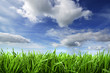 spring background with grass and sky