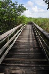 path on everglades