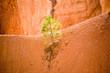 Bryce Canyon,  Felsenformationen im Licht, karge Bäume