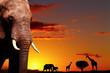 Fototapeten,afrika,sonnenuntergang,safarie,savanne