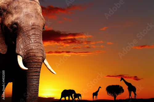 Poster African nature concept