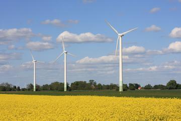 Windräder am Rapsfeld