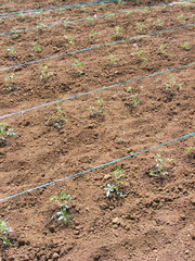 Piante - coltivazione