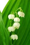 Fototapete Pflanze - Natur - Blume