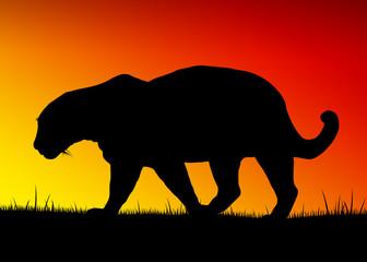 Silhouette di giaguaro