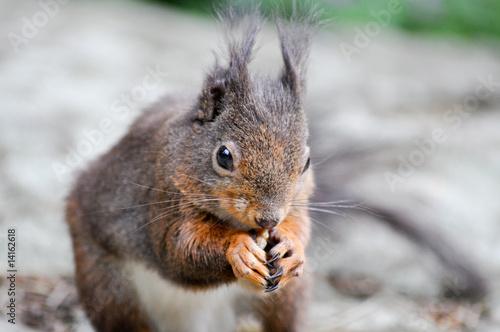 Tuinposter Eekhoorn Kleine Tiere im Wald