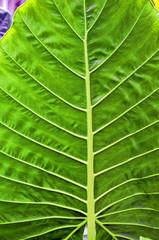 fairchild tropical garden, miami, florida