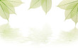 Composition nervures feuilles vertes avec reflet