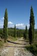Vigneti nei Colli Orientali del Friuli