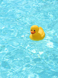 Rubber duck in the pool